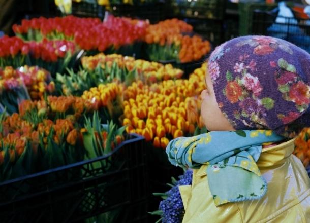 Warszawska giełda kwiatowa na Bakalarskiej
