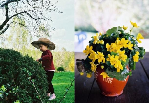 wiosna w ogrodzie i kaczeńce