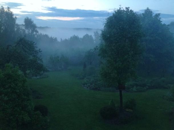 ogród we mgle