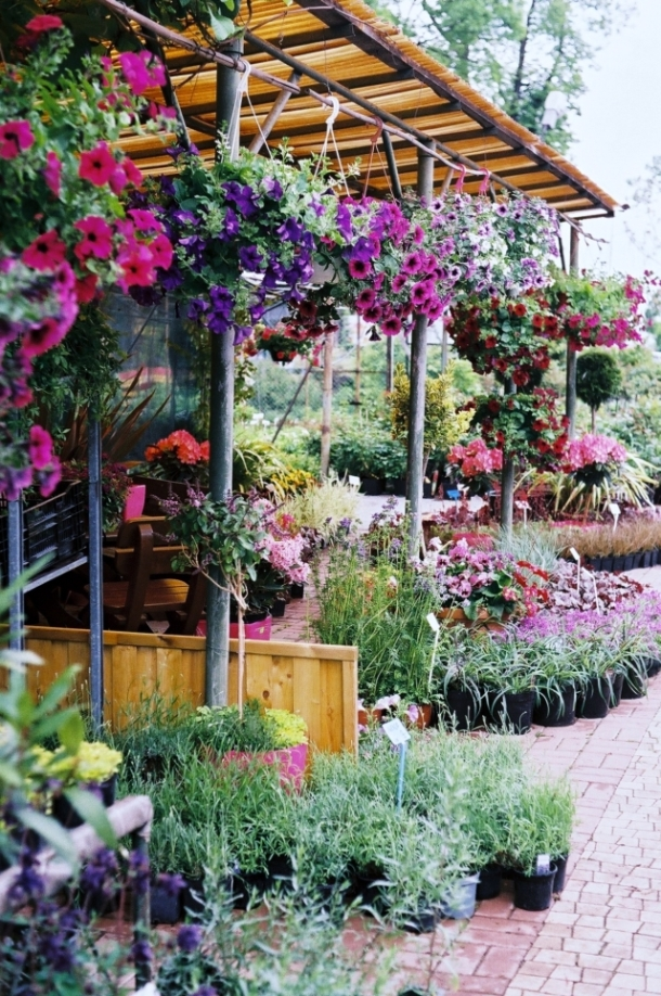 Pułąwy szkółka Ogród Marzeń