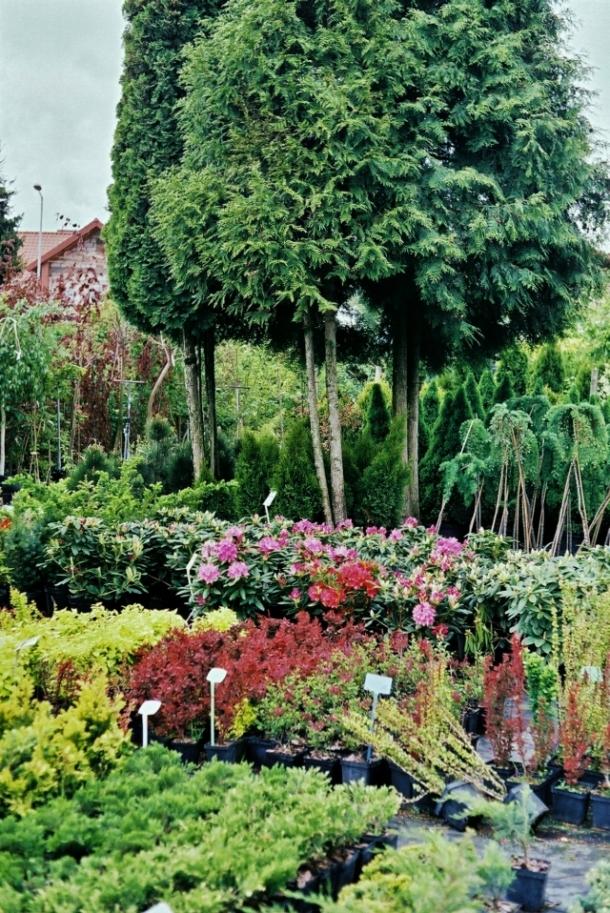szkółka Ogród Marzeń