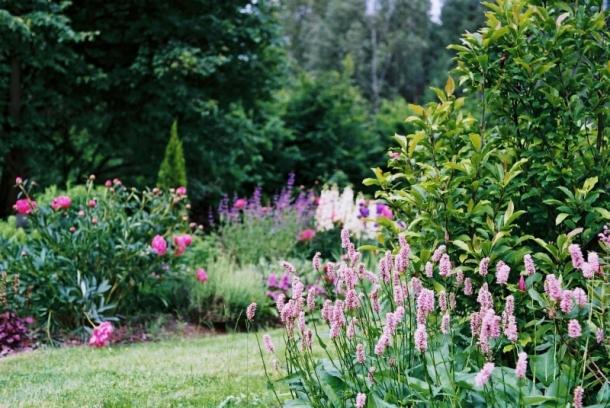 ogród koniec maja