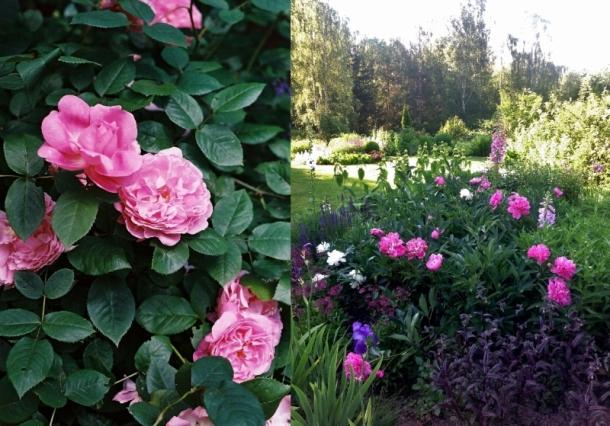 pastele i fiolety