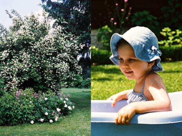 początek lata w ogrodzie