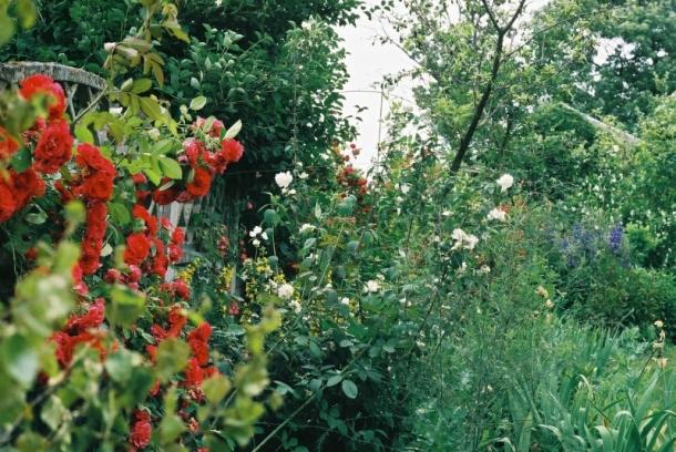 Tak wyglądał jedne z wielu ogródków we wsi. Widać w nim było wiele kwitnących kwiatów, głównie róż i roślin jednorocznych.