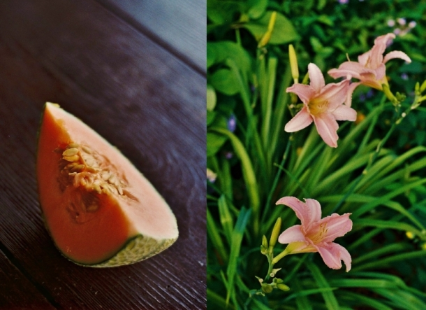 liliowce i melon