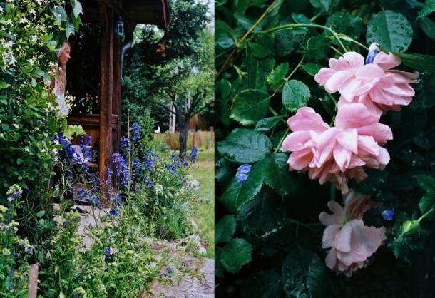 mazurski ogródek