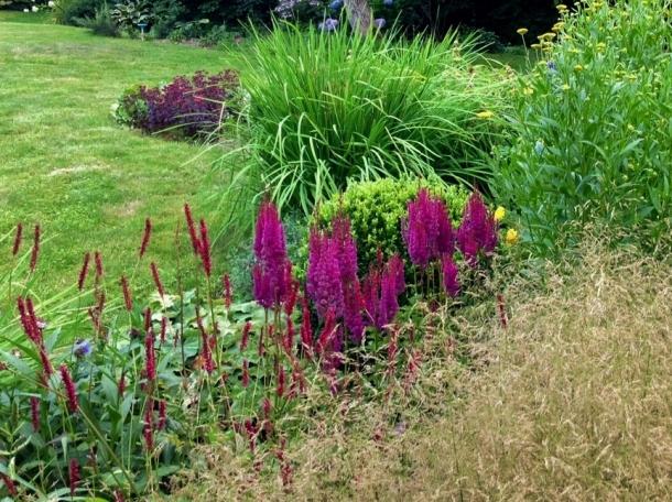 ogród lipiec