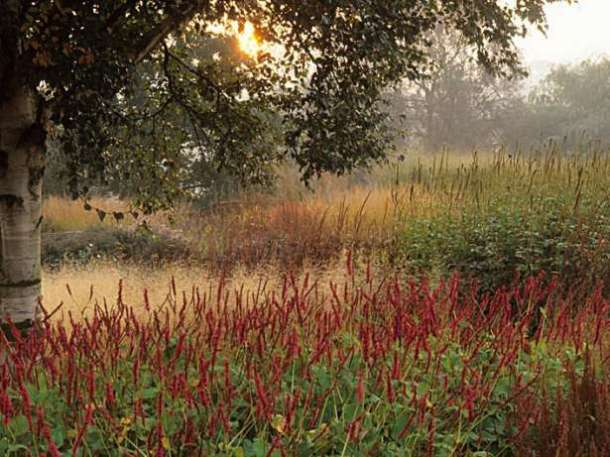 Photo by Neil Holmes garden design Piet Oudolf