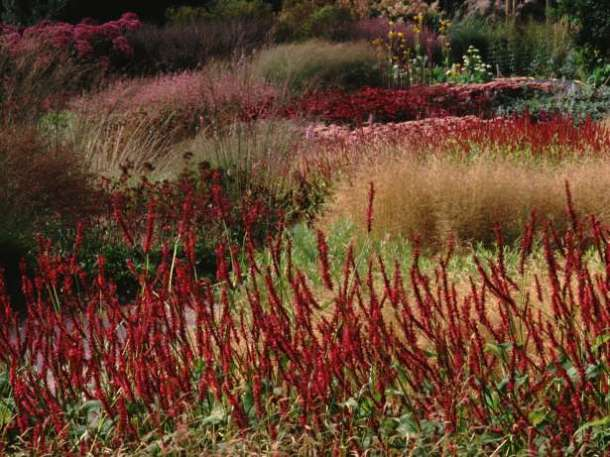Photo Neil Holmes, garden design piet Oudolf