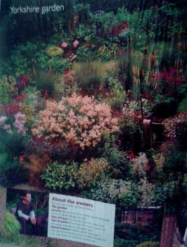 Yorkshire garden persicaria polymorpha